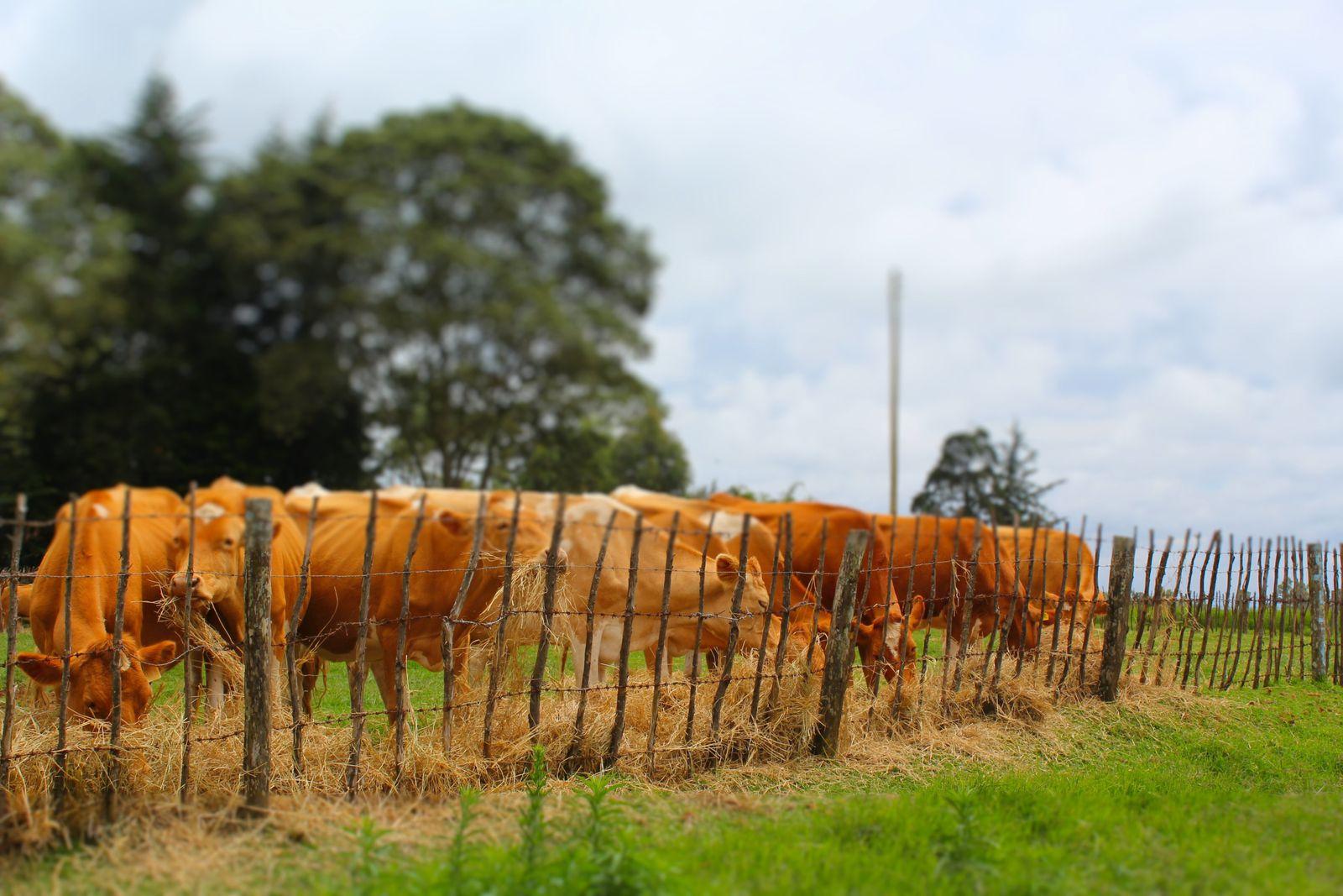 A delightful Tea Farm near Nairobi