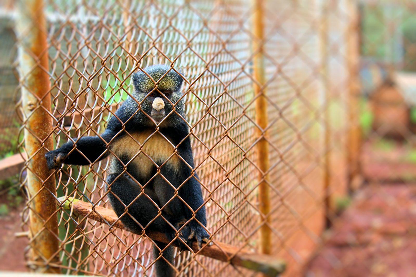 Nairobi Education Centre - Animal Orphanage