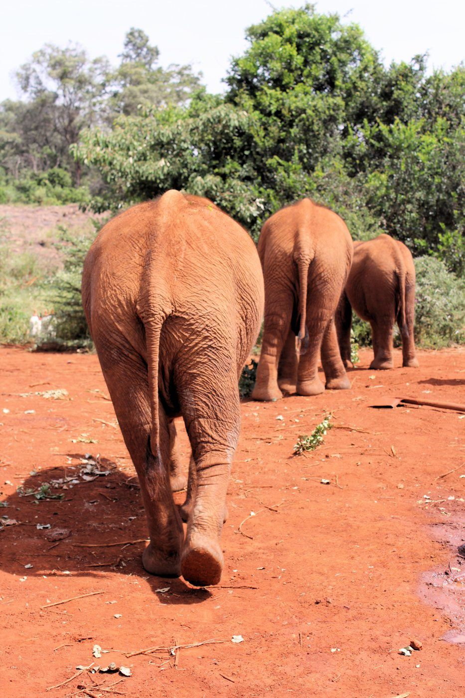 The David Sheldrick Wildlife Trust