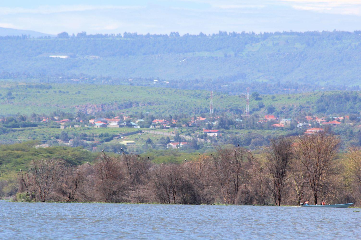 Hippo Boat Safari