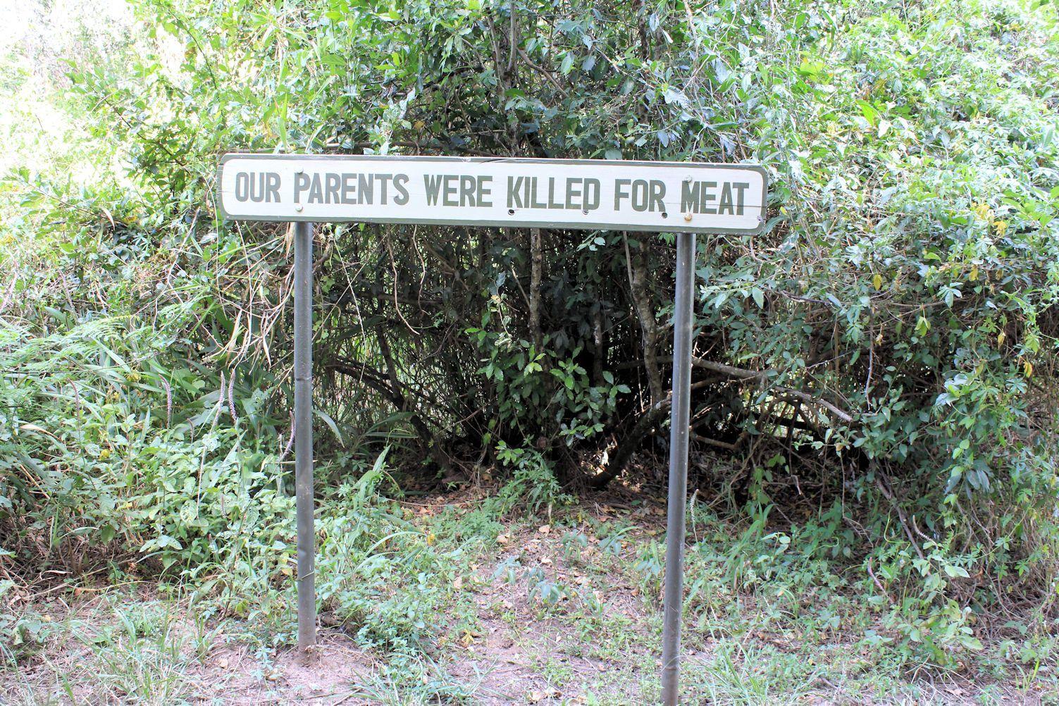 Sweetwaters Chimpanzee Sanctuary. Ol Pejeta conservancy part 2