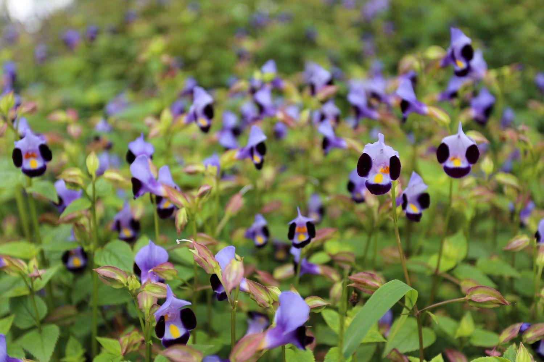 Flower paradise in BBG