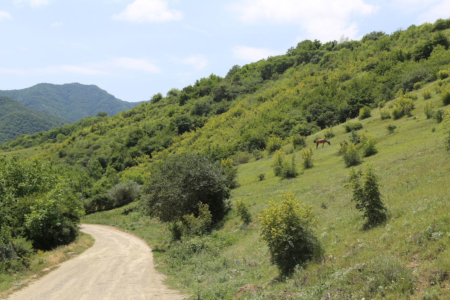 On our way to Didgori