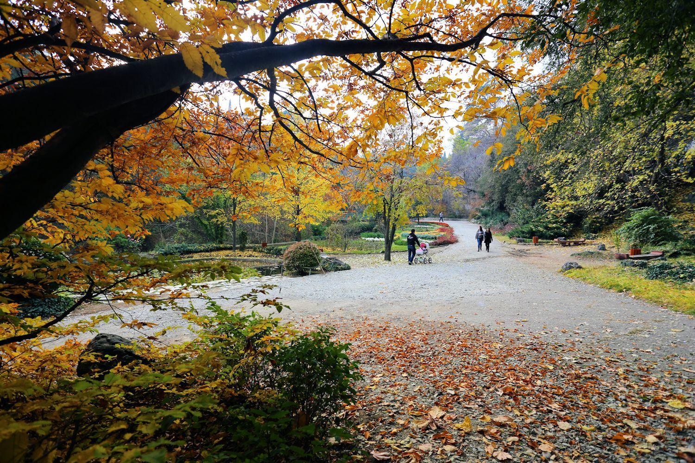 Tbilisi Botanical Garden in autumn