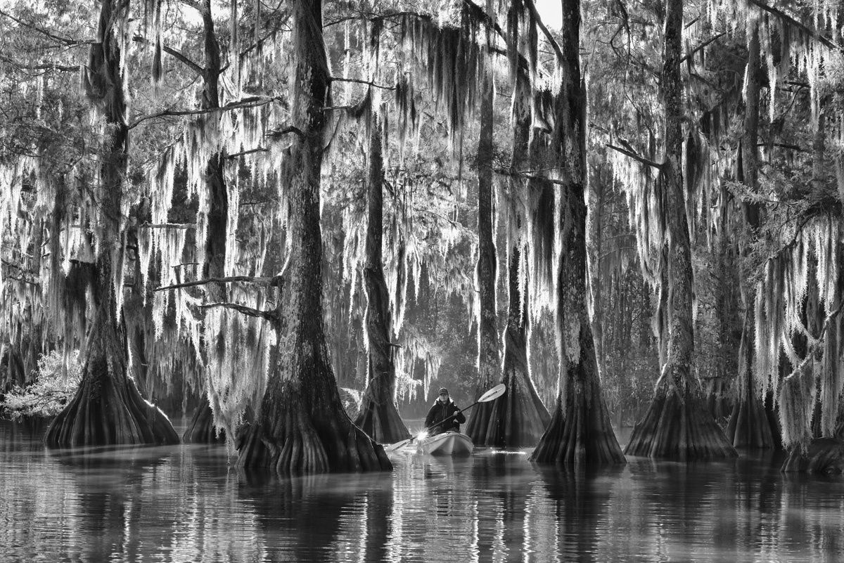 OVERALL WINNER  - TRAVEL PHOTOGRAPHER OF THE YEAR 2015 Marsel van Oosten (Netherlands) Atchafalaya Basin, Louisiana, USA Giant Cypress trees on a misty morning on one of the countless bayous of the Atchafalaya basin, the largest US wetland.