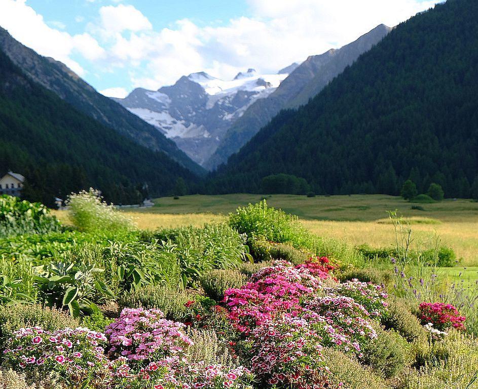 Il giardino del Bellevue con vista sul Gran Paradiso