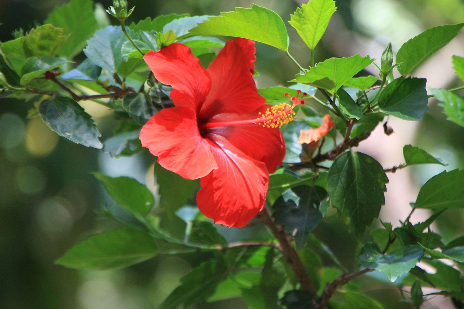 Photos de fleurs ( Mode automatique )