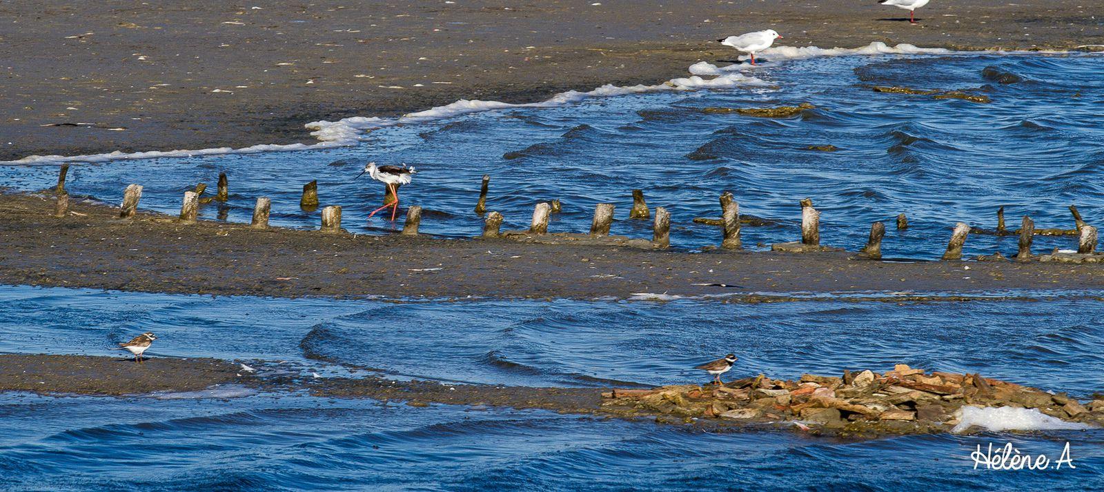 Salins du Midi, Aigues Mortes