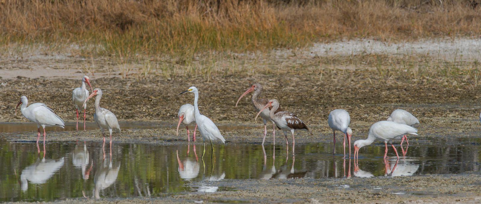 Oiseaux de Cuba