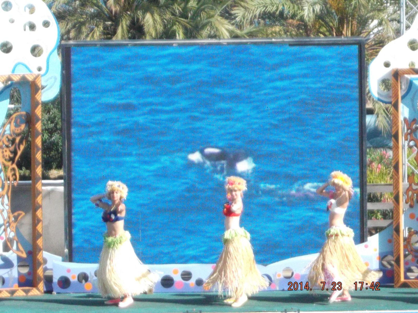 le spectacle des dauphins TIKKI