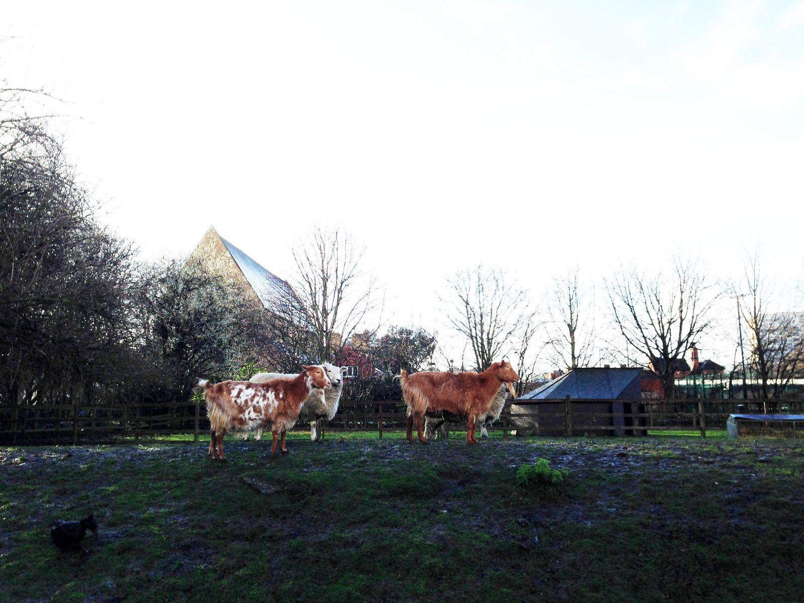 Mélodie va à la ferme (Hackney City Farm)
