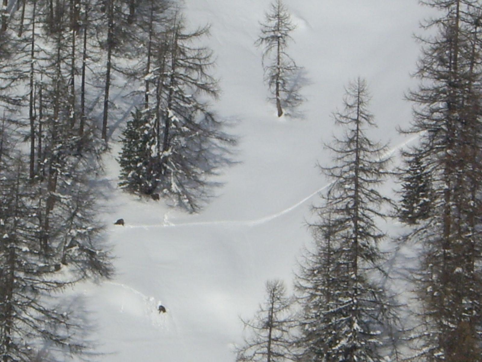 La neige cesse de tomber, en scrutent le flan de la montagne, nous apercevons deux petites tâches noires. L'exploration à la jumelle nous fait dire que les chamois commencent à sortir. Pour eux aussi l'hiver est trés long.