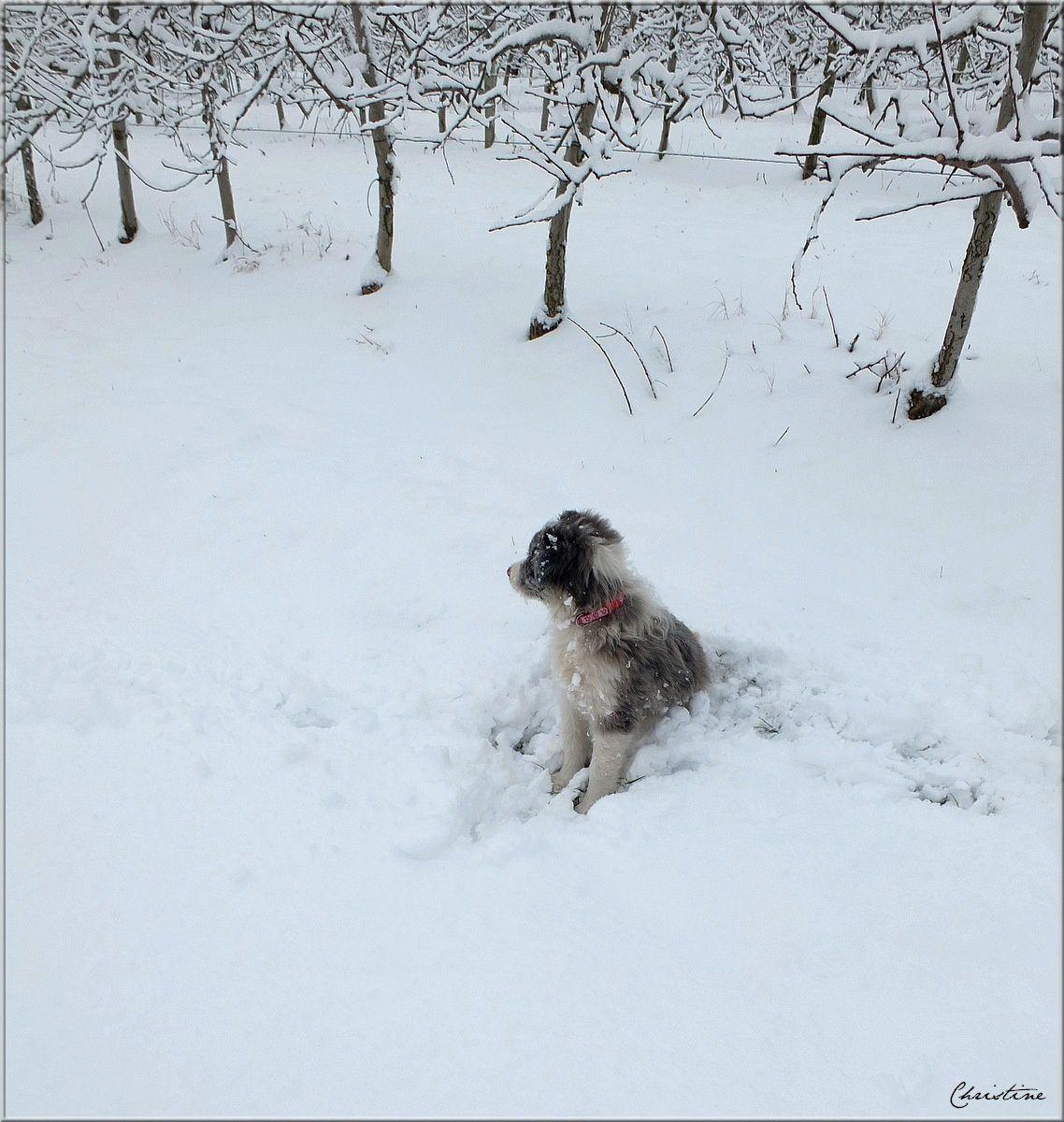 Heureux mes chiens dans la neige !