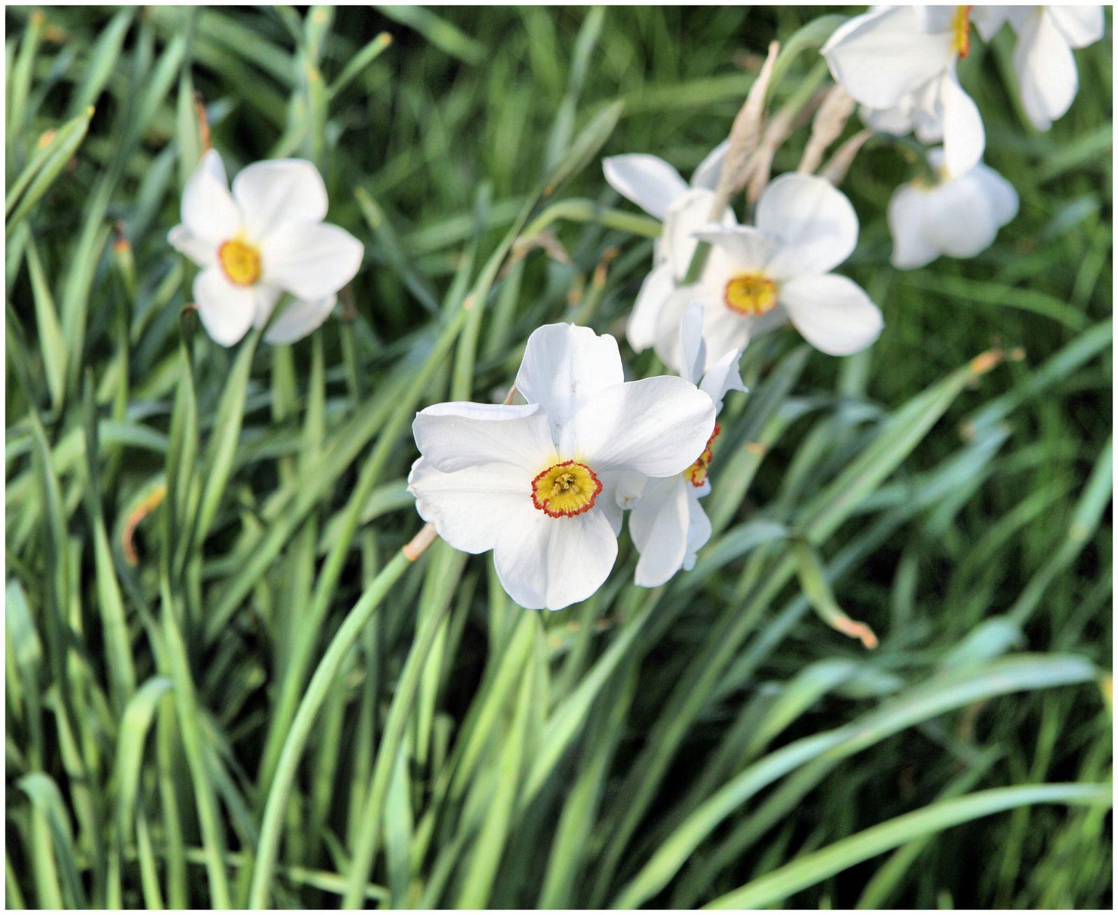 St James Park où il fait bon se prélasser sur l'herbe verte ou sur les chaises longues mises à disposition, la où l'on croise des écureuils grignotant une part de muffins, suivre Ma Mére l'Oie dans ses étirements... Admirer les parterres de fleurs de ce jardin anglais et respirer leurs parfums!