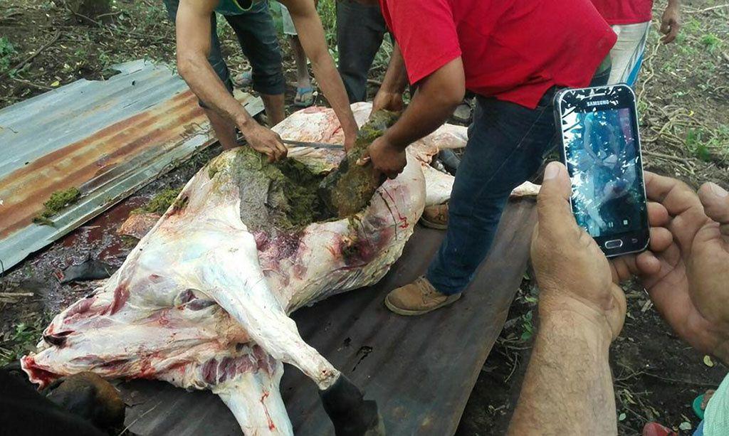 Images d'archives de novembre 2015. L'explosion avait produit un panache de 5km d'altitude et les blocs projetés avaient tué des vaches jusqu'à 3 km du volcan. Source: http://www.elnuevodiario.com.ni/nacionales/377663-telica-rugio-otra-vez/