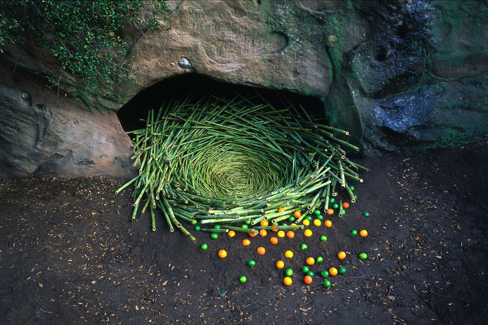 Land art on pinterest nests nature and google for Artiste nature