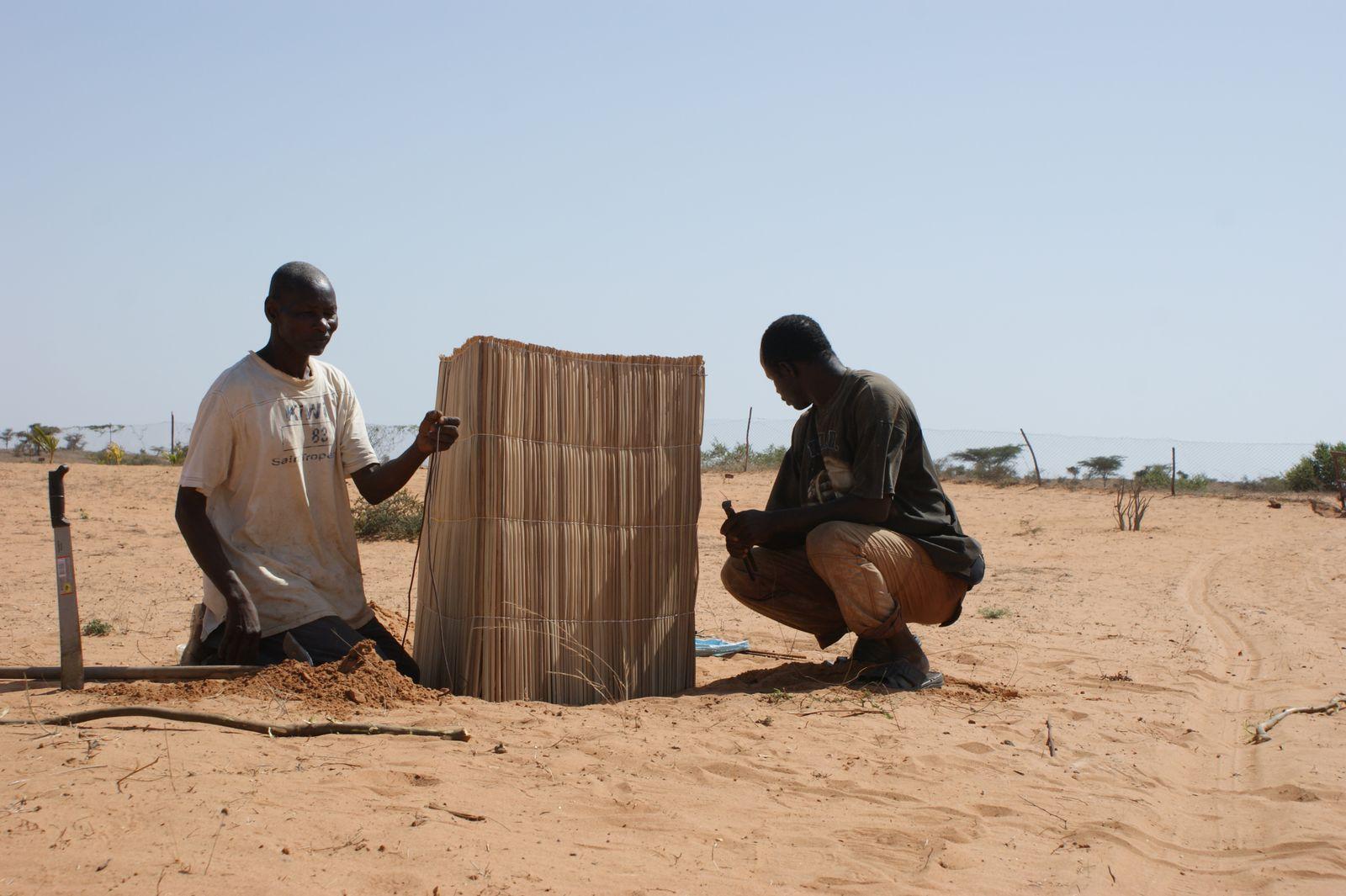 Daouda et Malick protègent les arbustes du vent.