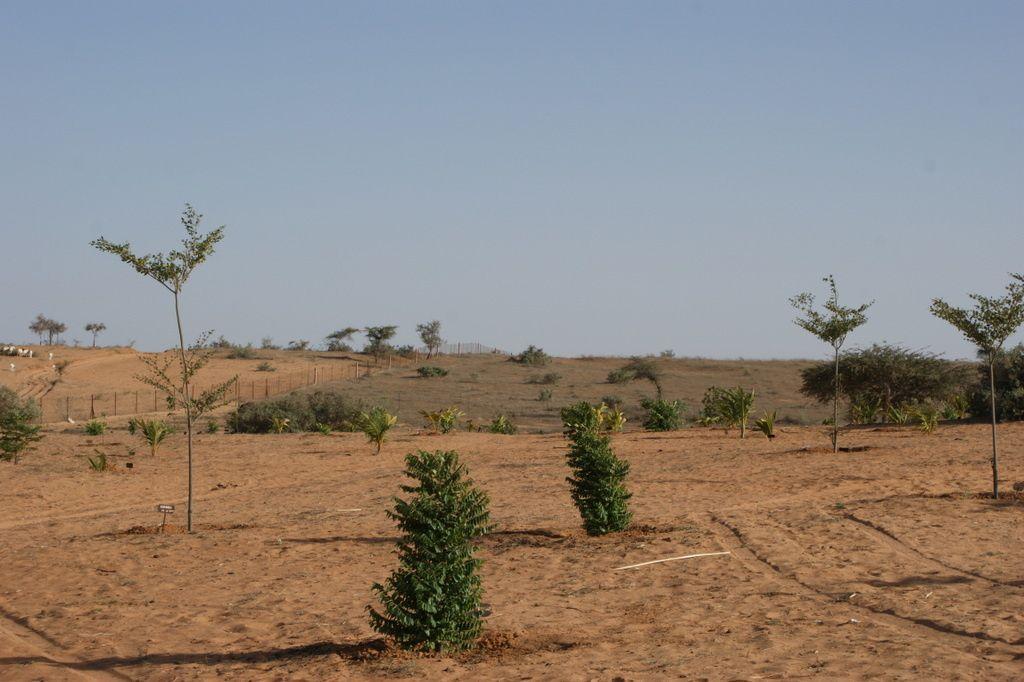 D'autres arbres, d'autres histoires: 2