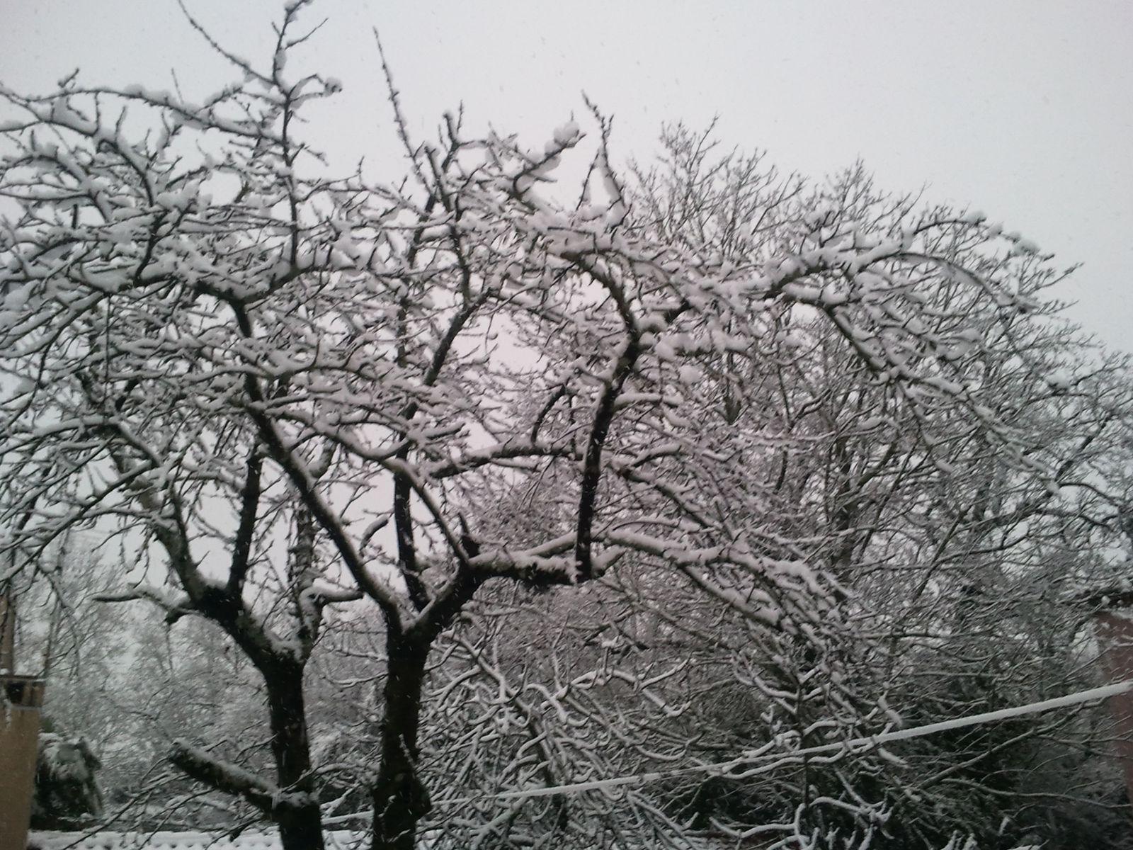 le dimanche 20 janvier...de la fenêtre de ma chambre...à Toulouse