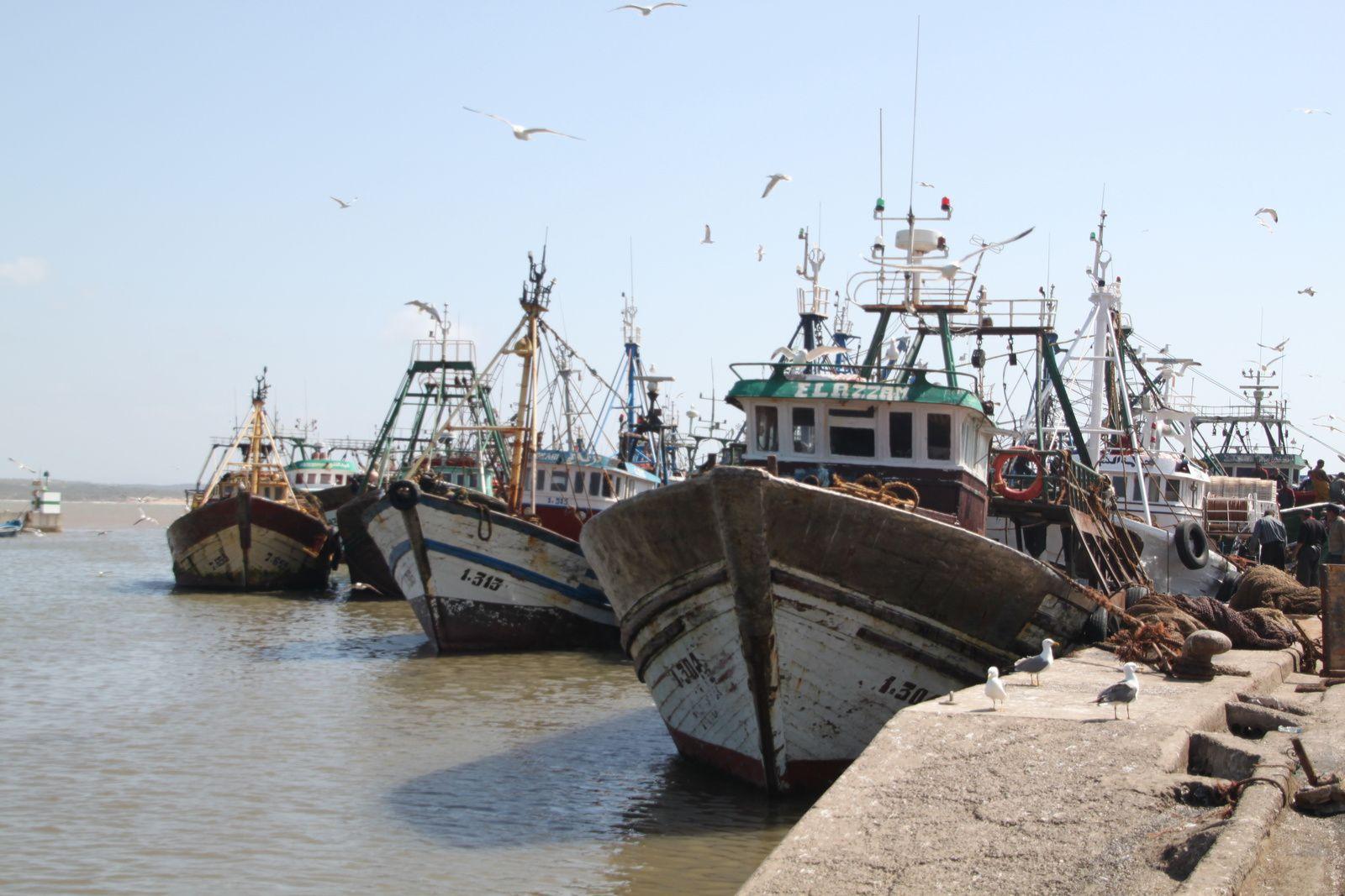 Port de pêche Essaouira, Maroc