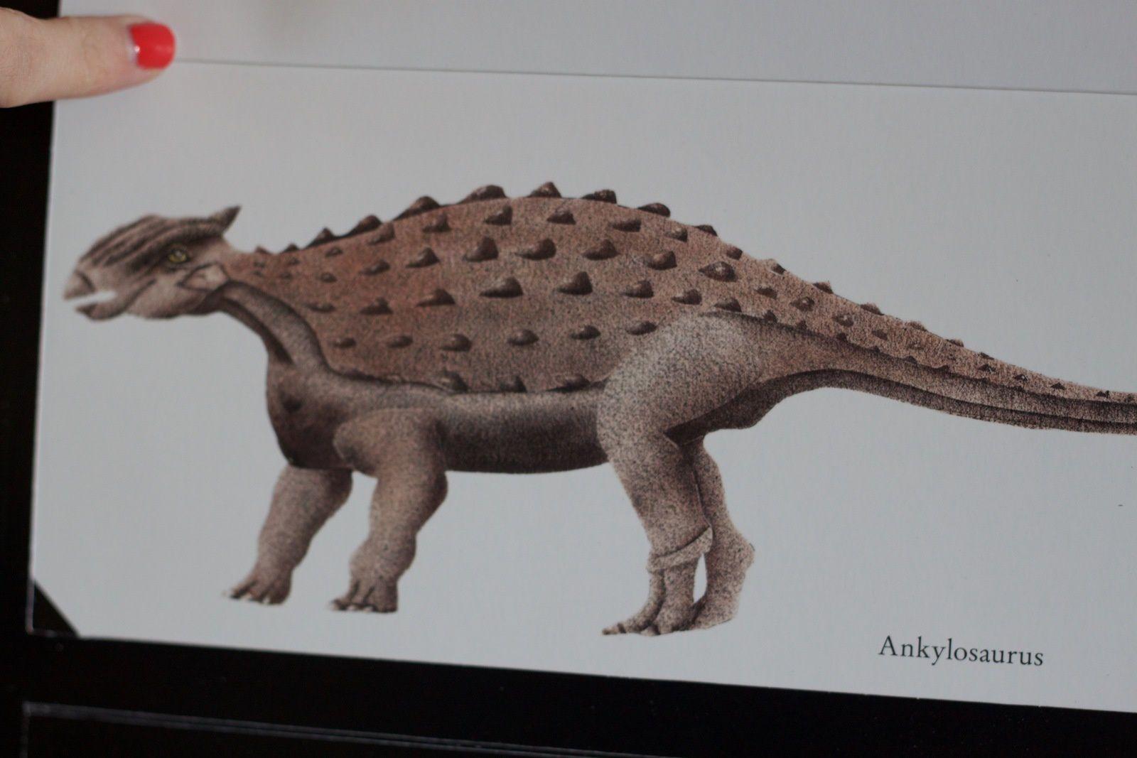 Dinorauses, un livre magique et visuel!