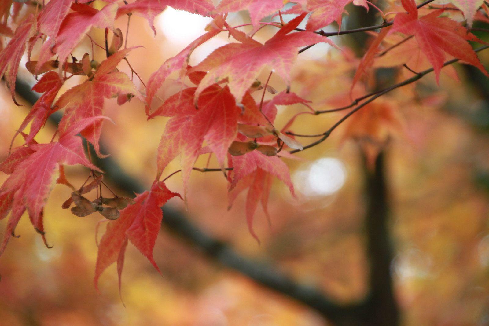 Les arbres colorés...une balade dans la campagne aux jolies couleurs
