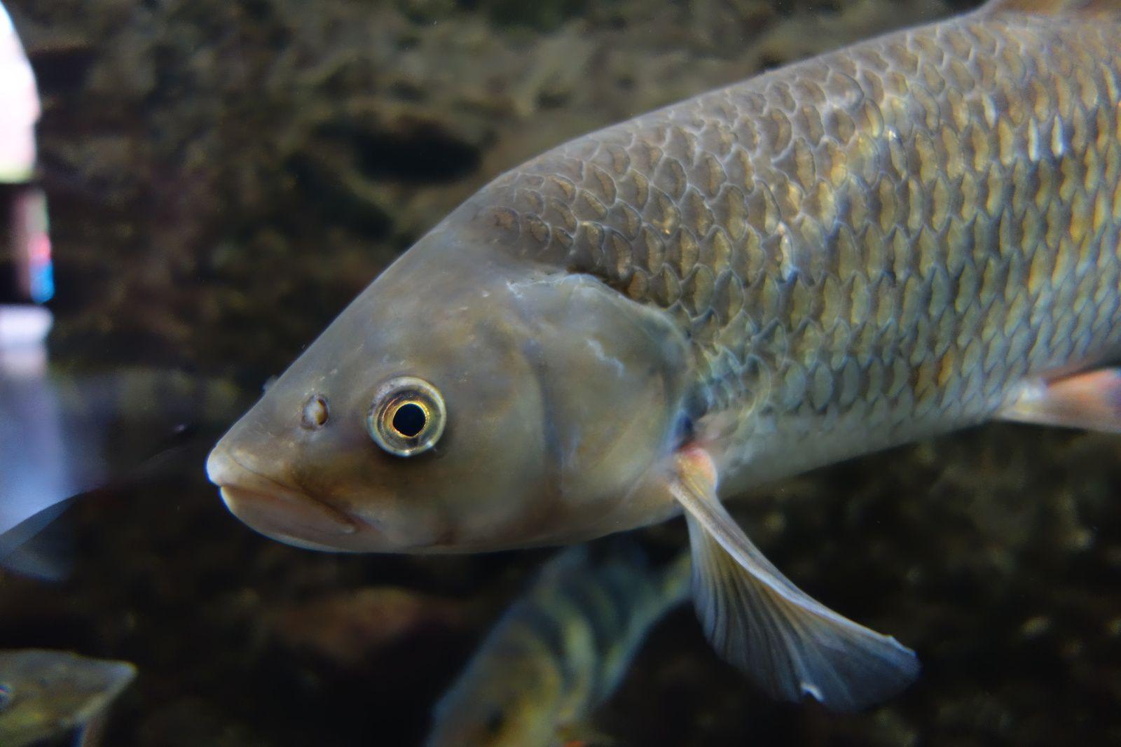 Des poissons à la citadelle de Besançon