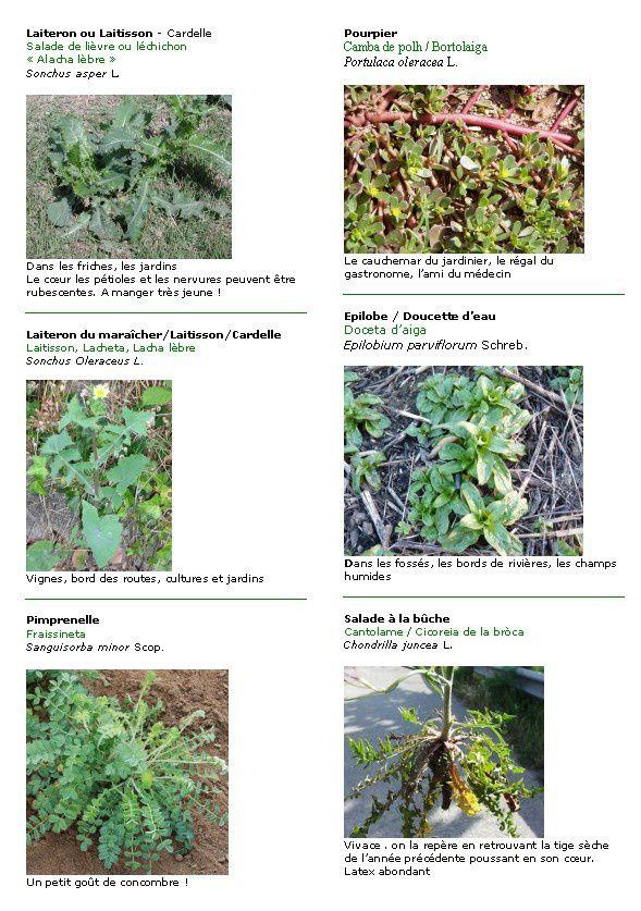 Plantes comestibles, salades