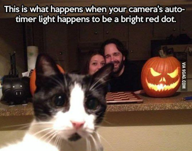 Photobombing cat