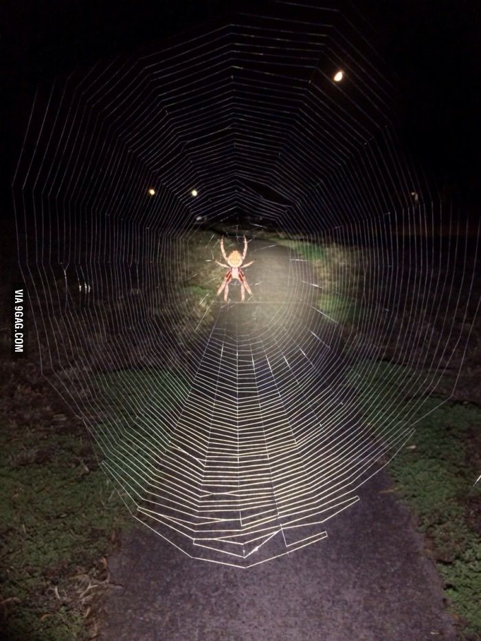 Managed to stop about 30cm before hitting this magnificent bastard on my way home from work this evening...