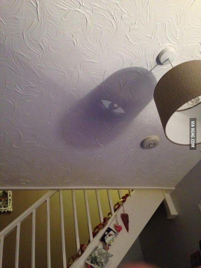 Interesting shadow created from my light shade!
