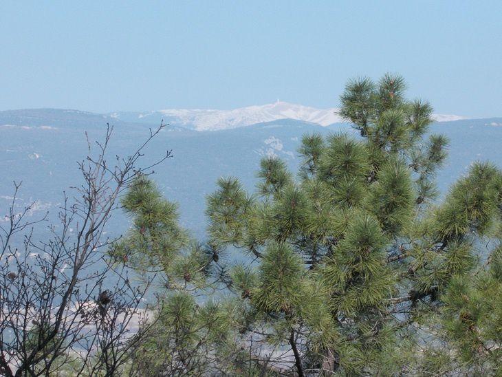 Mont Ventoux au fond