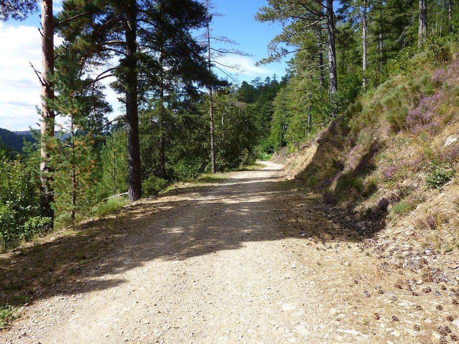 Descente roulante après le col du Sapet en direction de Bédouès.