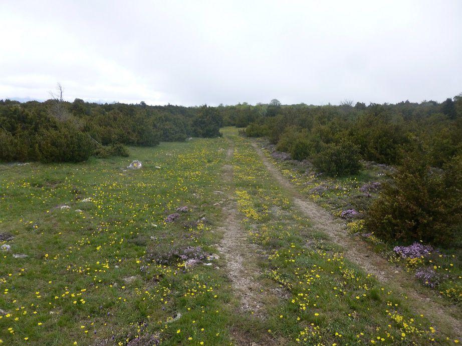 Sentier Cathare - GR36 (Aude-PO)