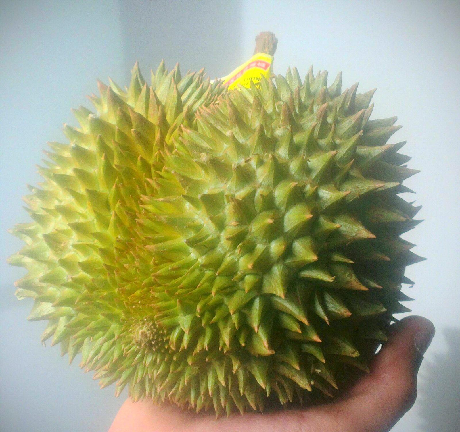 Bizarre foods : Le Durian