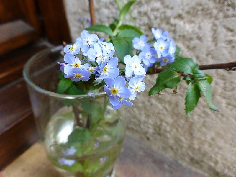 ne l'oubliez pas semblent dire ces fleurettes ...