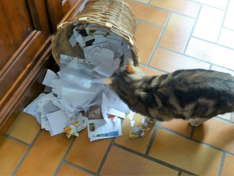 depuis quelques jours, inlassablement, il renverse la corbeille à papier et joue avec en me narguant
