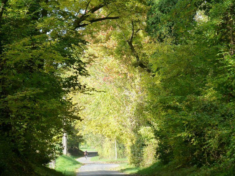 Douceur d'automne entre ombre et lumière