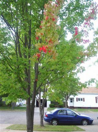 Stupid Tree