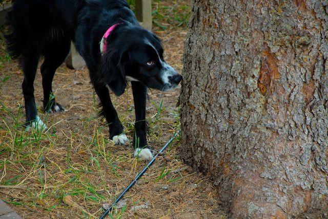 tree-eater-11