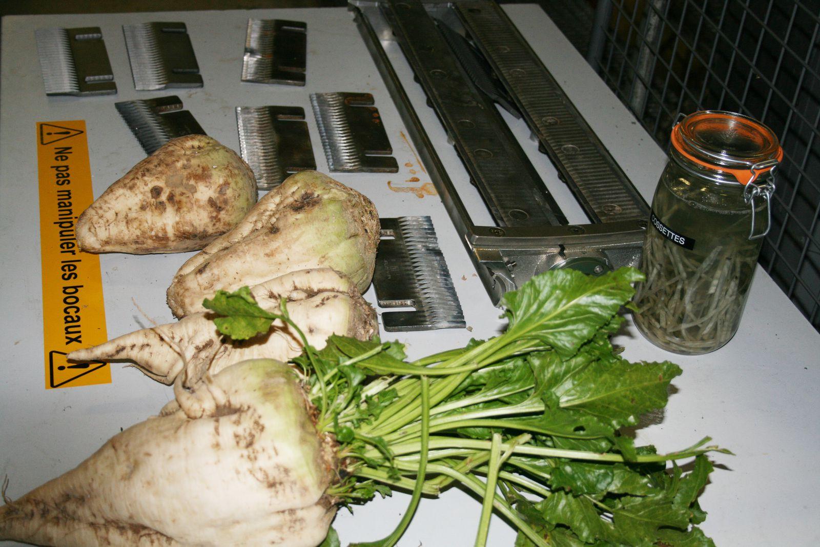 Visite de la sucrerie d'Origny Sainte-Benoite