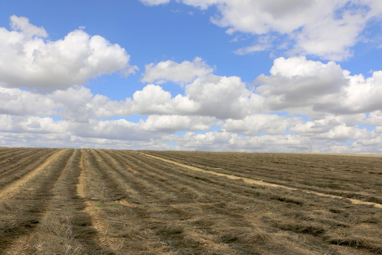 Vue du champ en direction de Bellecour.