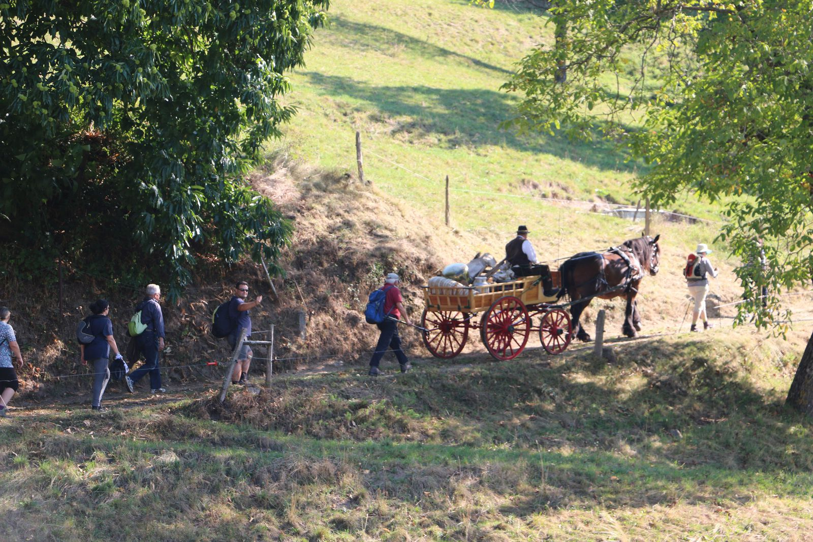 Une randonnée &quot&#x3B;folklorique&quot&#x3B; et retour de transhumance dans la vallée de Munster.