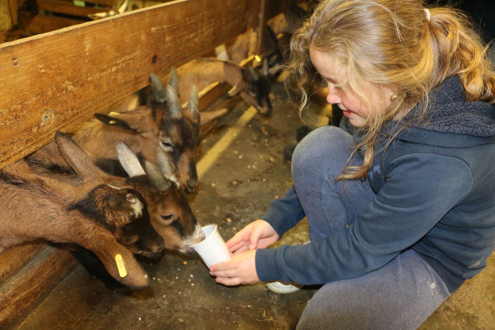 Visite de la chèvrerie du Brabant.