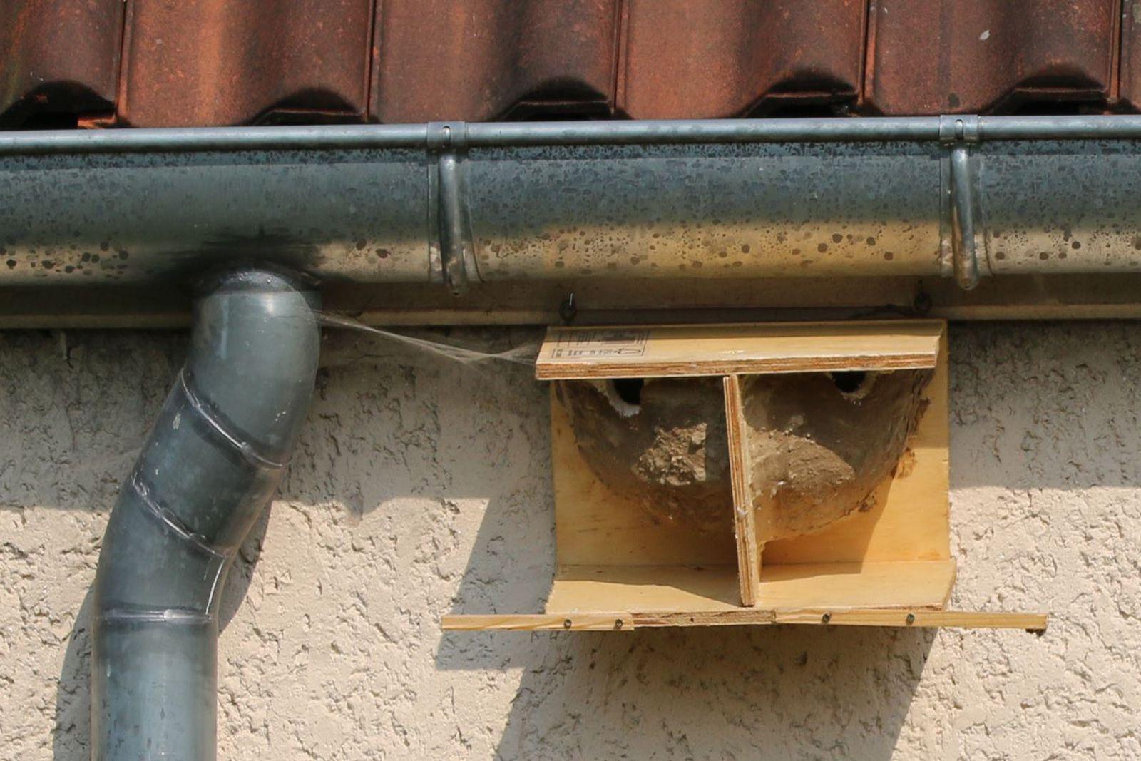 """En plus de son intérêt de """"propreté"""", la planchette peut aussi servir de renfort mécanique à un nid un peu faible."""