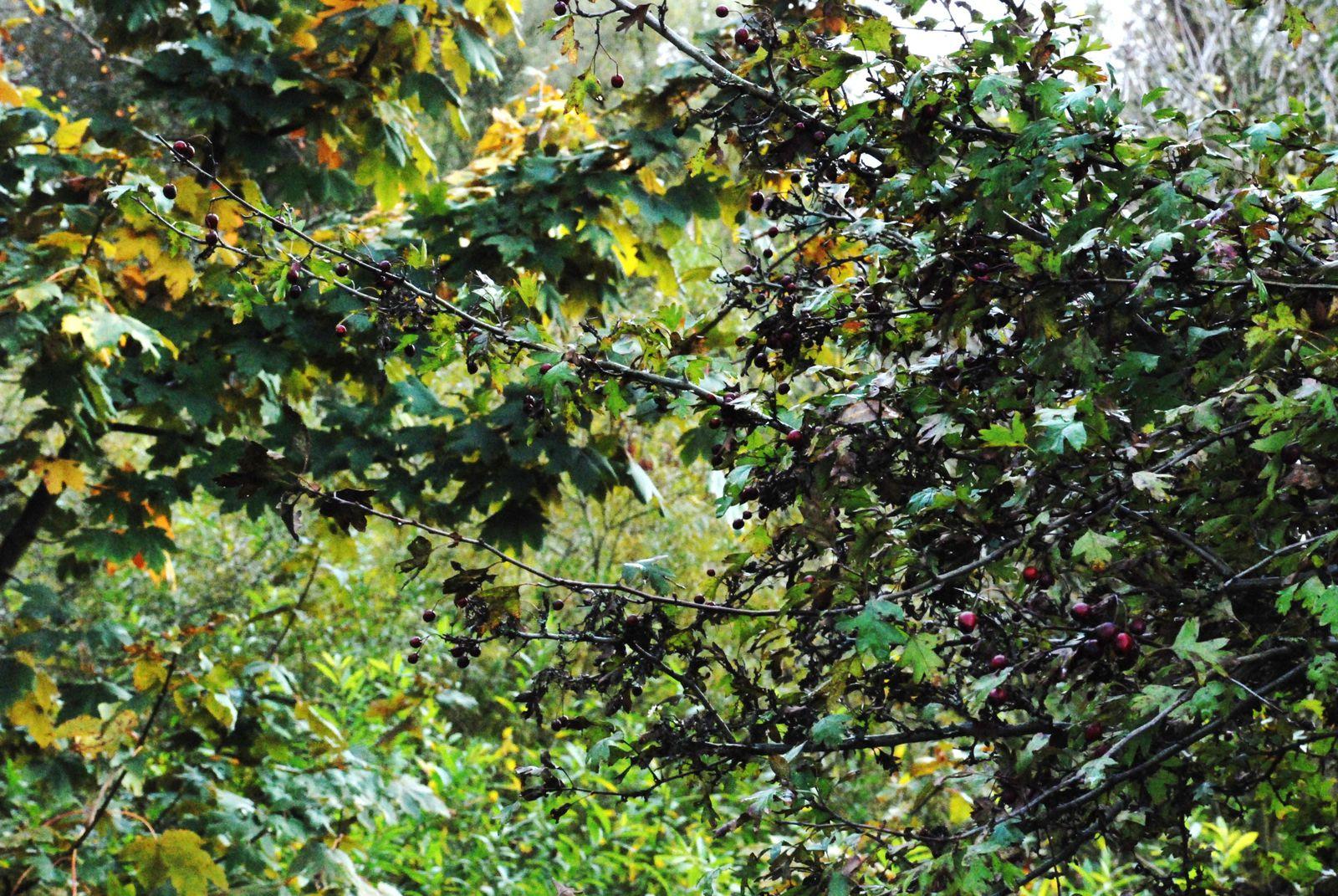 :::Natur malt Herbst:::