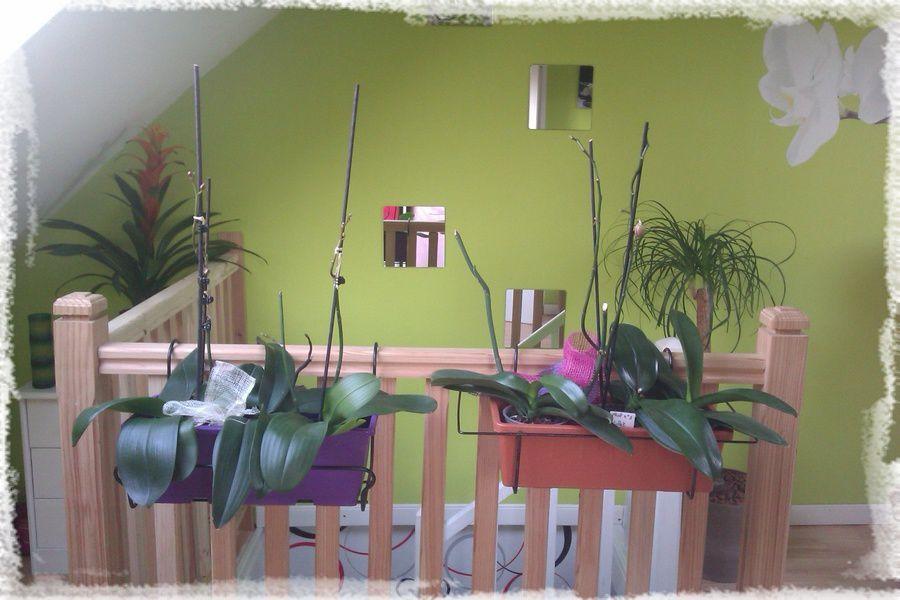 Culture dans une jardinière