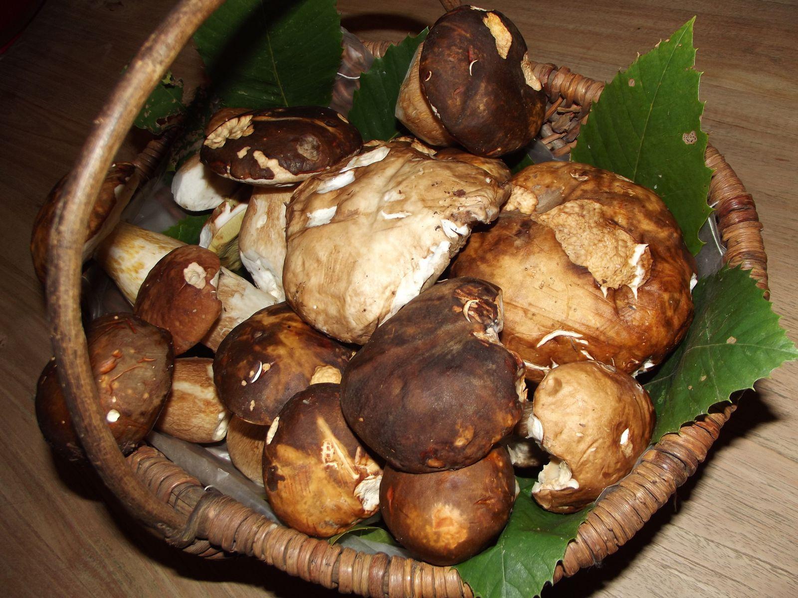 cepes à la persillade champignon