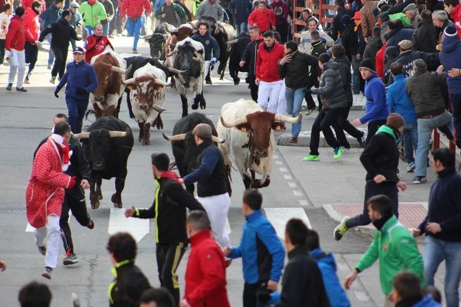 Se empezaban a templar en su carrera los toros.