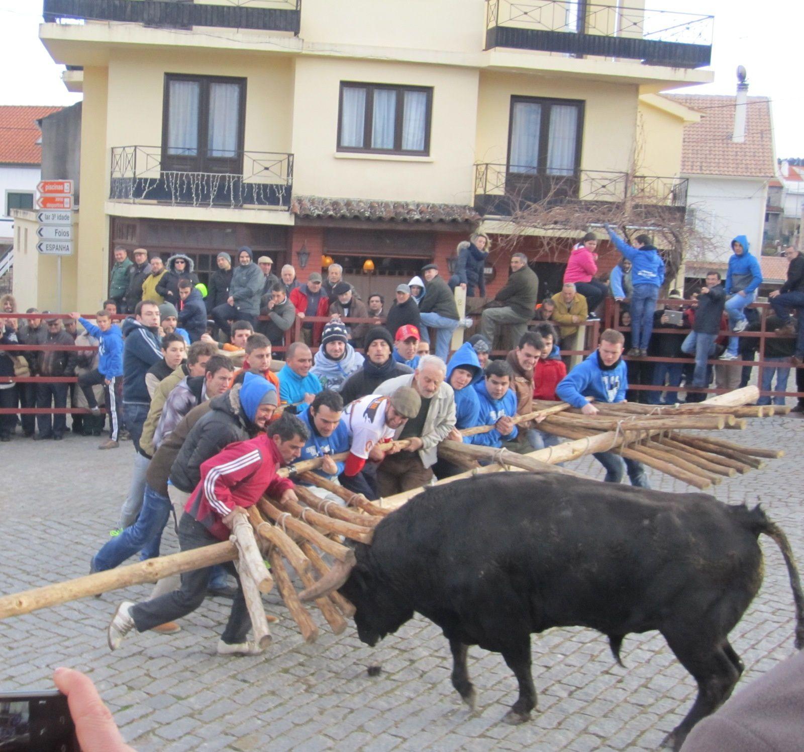 Primeros lances donde el toro se emplea con más codicia.